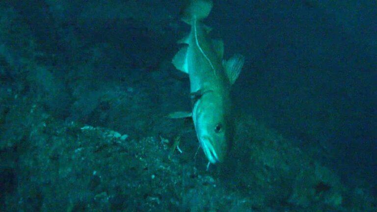 Video: Unterwasseraufnahmen Nordatlantik